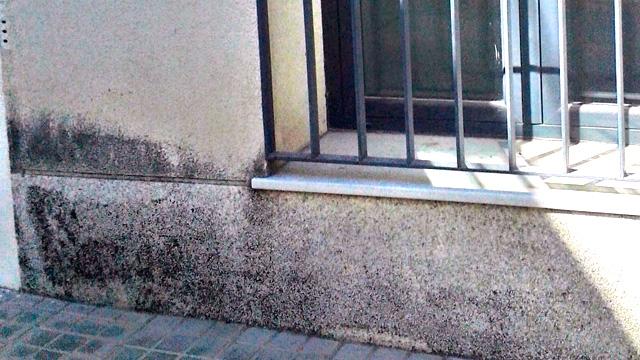 microorganismos-en-fachada